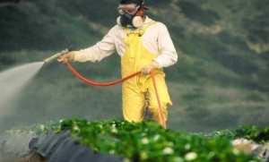 CHU d'Oran: 100 cas d'intoxications aiguës aux pesticides enregistrés annuellement