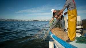 Planète - EN RAISON DE LA POLLUTION GALOPANTE AUTOUR DE LA MÉDITERRANÉE: Asphyxie de la Mer mineure en Espagne