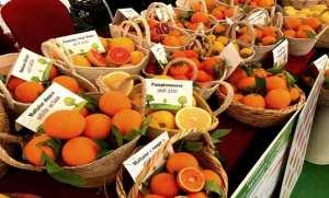 Première fête des agrumes mercredi et jeudi à Mostaganem