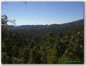 La forêt de Djebel Messaâd paradis des randonneurs