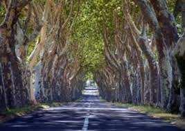 Mila - L'association Mila Verte prévoit la plantation de 500 platanes
