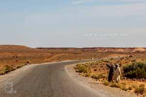 La vie bédouine à El-Bayadh, entre préservation d'un legs et rudesse de la nature
