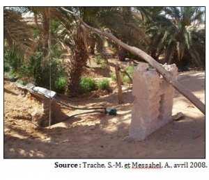 Talmine : la survie d'une oasis dans l'Erg occidental (Algérie)