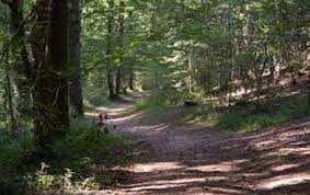 Mizrana ou le désastre que cache la forêt
