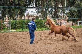 Tiaret - La filière équine en danger