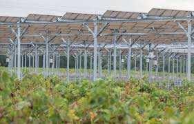 Planète (France) - L'agrivoltaïsme, ou quand les panneaux solaires se mettent au service des cultures