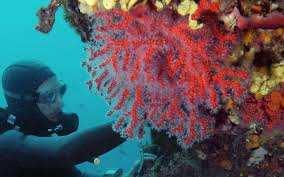 El Kala (El Tarf) - Trafic de corail, les auteurs sous contrôle judiciaire