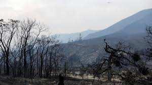 Planète - Francis Hallé: «90% de la forêt a disparu au niveau mondial!»