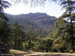Theniet El Had (Tissemsilt) - Randonnée au Parc national de Theniet El Had: Au paradis des cèdres