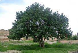 BLIDA - 5.000 arbres plantés à l'université d'El Affroun