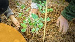 Boumerdès - Reboisement à Keddara: Le caroubier, nouvelle tendance
