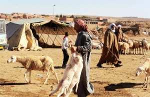 Algérie - NAÂMA: Sale temps pour les éleveurs
