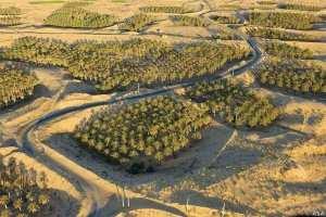 les ghouts du Oued souf, Algérie.
