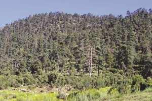 CONSERVATION DES FORÊTS DE RELIZANE: 74 verbalisations pour atteinte au domaine forestier