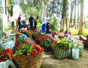 Douéra (Alger) - L'agroécologie, l'autre agriculture