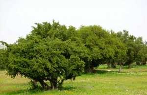Mostaganem - De l'arganier à Stidia
