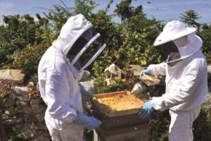 FILIÈRE APICOLE À MOSTAGANEM: L'impact de l'utilisation de pesticides dans les zones d'élevage apicole en débat