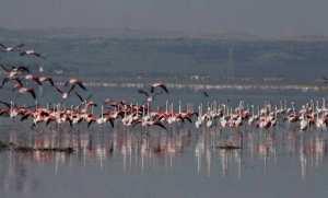 Des mesures pour protéger le lac Télamine