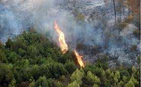 Algérie - Selon le DG des forêts: Les incendies en février sont «criminels»
