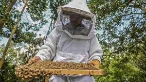 Planète (Amérique du Sud) - Un agrotoxique interdit en Europe décime les abeilles en Colombie