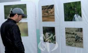 Batna: le photographe Abderraouf Mezouri met en exergue la faune des Aurès