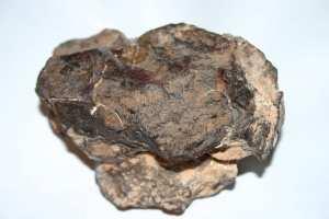 Une protéine d'origine extraterrestre découverte dans une météorite
