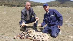 العثورعلى قبر للشهيدين يعود الى 1958 .