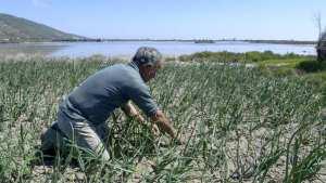 Planète (Afrique) - Pour contrer la pénurie d'eau en Tunisie, un système unique de culture sur sable