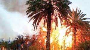Ouargla - Plus de 250 palmiers détruits par les flammes