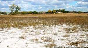 Algérie - Agriculture au sud: La salinité menace les sols