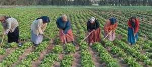 La CNMA ouvre son capital aux femmes rurales