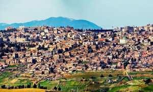 Culture de Colza à Médéa : Lancement de la campagne de moisson