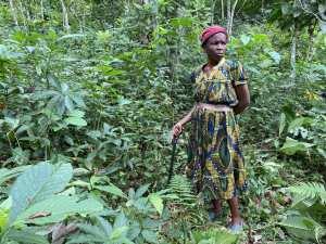 Planète (Afrique) - «C'est la catastrophe»: au Cameroun, les producteurs de cacao frappés par la sécheresse