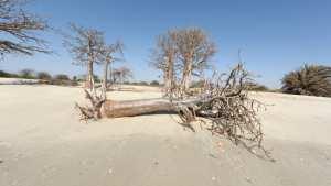 Planète - Climat en Afrique: menace pour la survie de millions de personnes, selon l'ONU