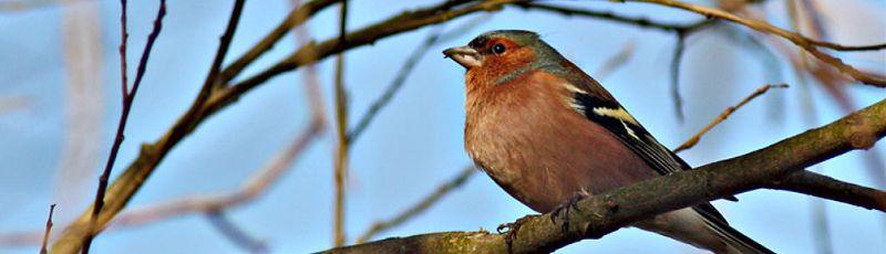 Tizi-Ouzou - Ornithologie