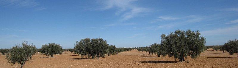 النعامة - ITMAS : Institut de technologie moyen agricole spécialisé