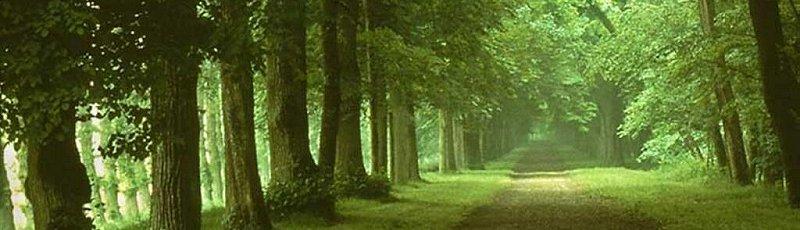 Médéa - DGF : Direction générale des forêts