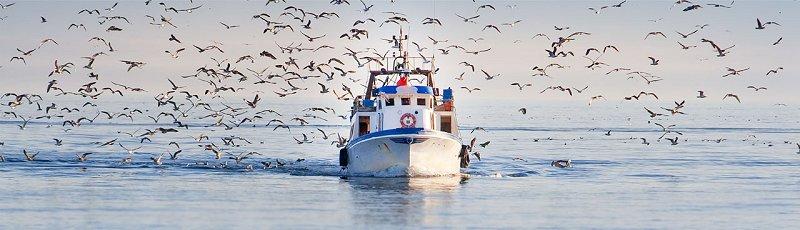 بجاية - EFTPA : Ecoles de formation en techniques de pêche et d'aquaculture