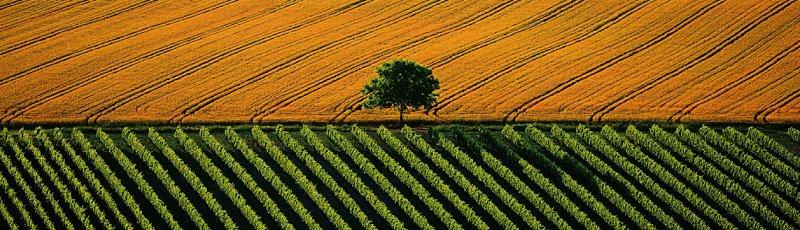 Algérie - CAW : Chambres Agricoles
