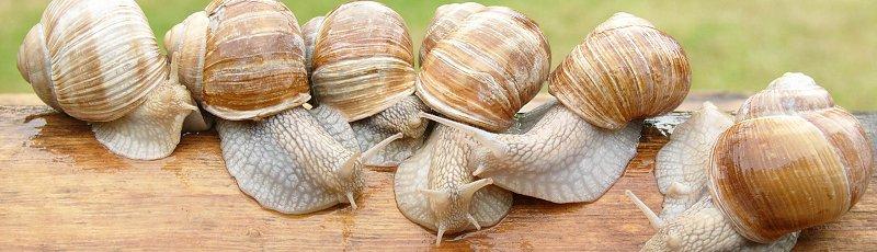 Béchar - Héliciculture : l'élevage des escargots
