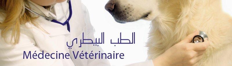 Khenchela - Médecine vétérinaire