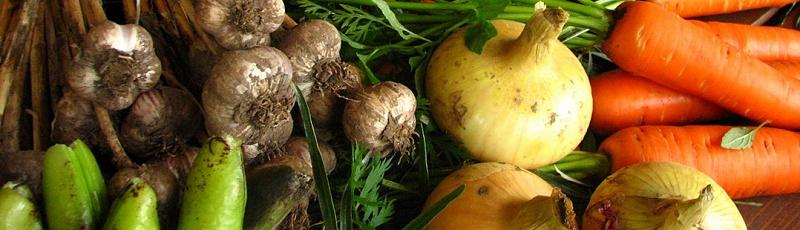 Mostaganem - Agriculture Bio (Biologique), Permaculture