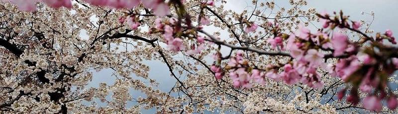 سكيكدة - Amenzu n'tfsut, la fête du printemps