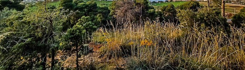 Tlemcen - Forêt du petit perdreau (Tlemcen)