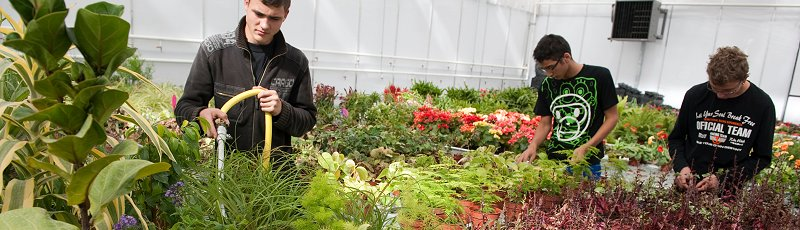Mostaganem - Horticulture et paysagisme