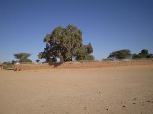 غرس الأشجار بضواحي سمارة
