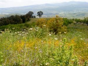 أزهار الربيع بضواحي بومرداس