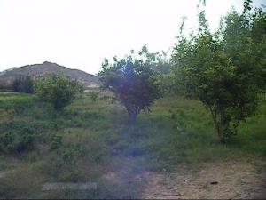 حقول أشجار التفاح ببلدية جانت (ولاية إليزي)