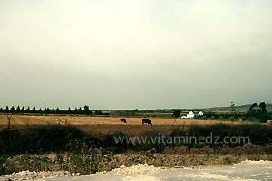 Sidi Khettab