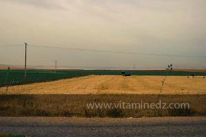 Sidi Khettab, zone agricole de cereales
